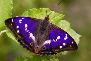 Pollinator on leaf