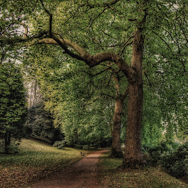 The path best trod by Laura Horne - Landscapes Forests ( canon, nature, wales, autumn, beautiful, path, trees, walk )