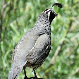 by Trish Hamme - Animals Birds