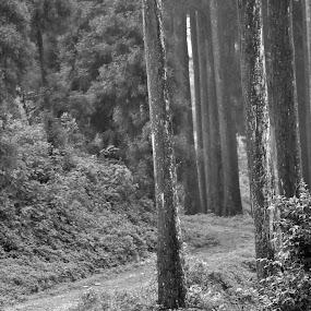 by Debanjan Goswami - Landscapes Forests ( 05-01-2017,  )