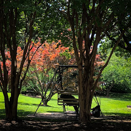 Centennial Park by Mary Phelps - City,  Street & Park  City Parks ( centennial park, nashville, tennessee, street, summer,  )