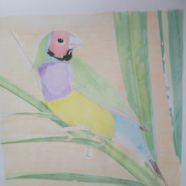 Bird drawing  by Reagan Muriuki - Drawing All Drawing