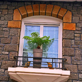 Window by Dobrin Anca - Instagram & Mobile iPhone ( palm tree, window, green, street, brittany )