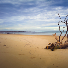 Alone by Cary Leabeater - Landscapes Beaches