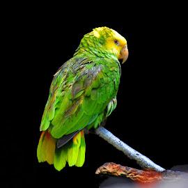 by Jaideep RC Banerjee - Animals Birds