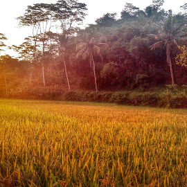Nature by Muhammad Imaad Abdillah - Instagram & Mobile Android