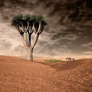 tree_on.jpg