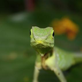 UNKNOWN by Maji Shuki - Animals Reptiles