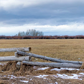 Rotting Fence by Chad Roberts - Buildings & Architecture Decaying & Abandoned ( field, fence, winter, rot, meadow, rotting )
