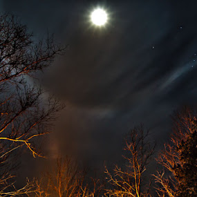 Firelit View of Moon Ring Over Orion by Josh Mayes - Landscapes Starscapes ( ring, moon, orion, stars, firelit, trees, night, light, fire )