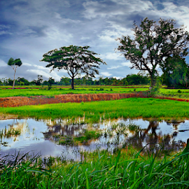 Rice Paddy View by Ian Gledhill - Landscapes Prairies, Meadows & Fields ( field, rice, nature, trees, scene, lake, rice paddy, view, landscape, rural, country,  )