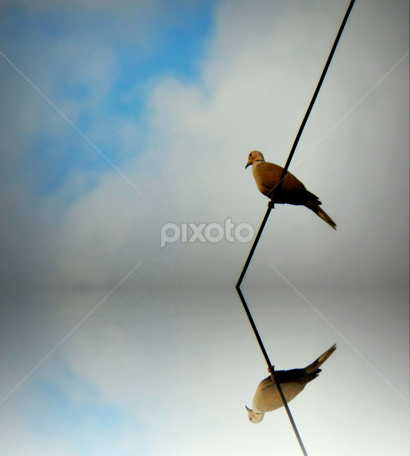 A dove on a wire by PINAKI MITRA - Novices Only Wildlife