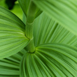 Green by John  Pemberton - Nature Up Close Other plants ( mt ranier, green, green leaf, greenery, foilage )