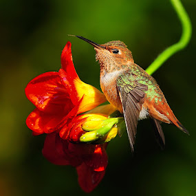 Wut's up  by Dan Pham - Animals Birds