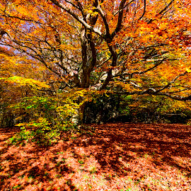 Color explosion by Mauro Fini - Landscapes Forests