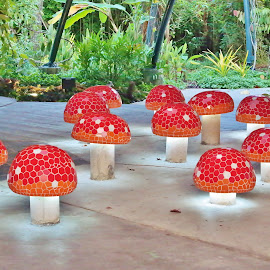 Mushrooms by Koh Chip Whye - City,  Street & Park  City Parks (  )