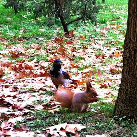 Share your nut! by Ирина Саунина - City,  Street & Park  City Parks ( парк, белочка, осень,  )