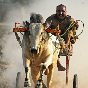 Bull Cart Race by Abdul Rehman - Sports & Fitness Other Sports ( pakista'multan, bull cart, rural life, rural sport, canon 7d,  )