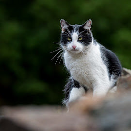 Little cat... by Tomáš Svoboda - Animals - Cats Portraits ( canon, wild, cat, nature, sigma, czech, wildlife, bokeh, portrait, mammal, eyes, naturefauna, animal )