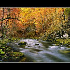 Kamacnik by Vanja Vukadinović - Landscapes Forests ( mountain, nature, autumn, river )
