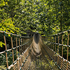Hegelian Rope Bridge by Brian Pierce - Buildings & Architecture Bridges & Suspended Structures ( gardens, bridge, heligan,  )