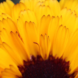 Flower by Narjes Seghatoleslam - Abstract Macro ( petals, color, macro photography, brown, yellow, beauty, portrait )