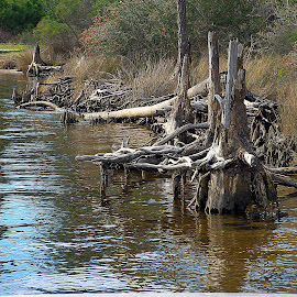 Shoreline by Pam Satterfield Manning - Nature Up Close Trees & Bushes ( water, patterns, nature, shoreline, reflections, trees, nature up close, brush, stumps )