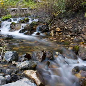 Silky, Silent by Dallas Golden - Nature Up Close Water ( water, wilderness, forest, long exposure, river )