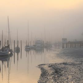 Misty tamaki river by Johan Koch - Transportation Boats ( boats, tamaki, river, mist )