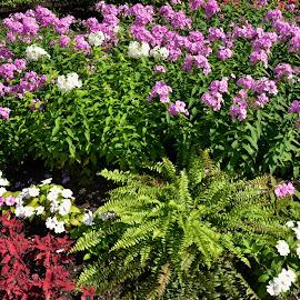 Coloured garden at Quebec city by Réal Michaud - City,  Street & Park  City Parks ( urban, coloured, nature, parc, flowers )