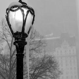 NYC Winter #5 by Tomek Karasek - City,  Street & Park  City Parks ( lantern, b&w, ice, snow, new york, nyc, central park, the plaza )