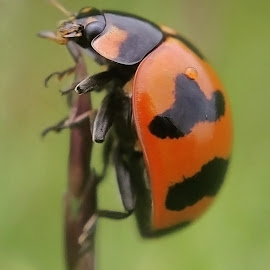 Bug by AbngFaisal Ami - Instagram & Mobile Other