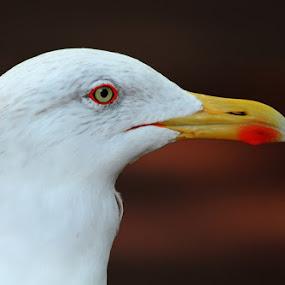 by Mirjana  Bocina - Animals Birds (  )