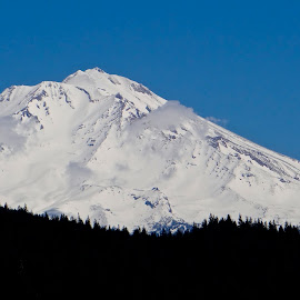 Mt. Shasta, CA by Campbell McCubbin - Landscapes Mountains & Hills ( blue sky, mountain, peak, snow, trees )