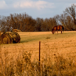 Rural Missouri  by Deborah Lucia - Landscapes Prairies, Meadows & Fields ( field, horse, haybales, rural, country )