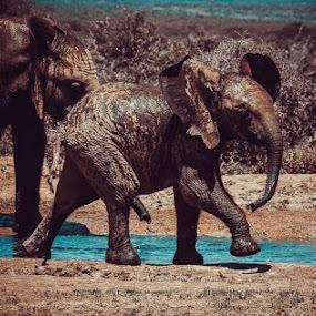 Baby Elephant by Johann Bekker - Novices Only Wildlife ( roadtrip 2017, addo 2017 )