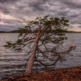 by Bojan Bilas - Nature Up Close Trees & Bushes