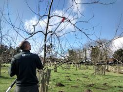 Photo 1 / 1 - Swanbarn pruning, Feb 2017