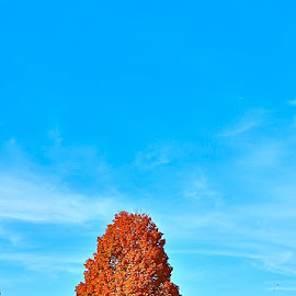 Lone Tree by Laura Luchsinger - Nature Up Close Trees & Bushes