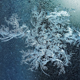 Frost on Kitchen Window 4 by Paul Reese - Nature Up Close Other Natural Objects