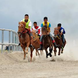 Pacuan Kuda Gayo by Edy Saputra - Sports & Fitness Other Sports ( bener meriah, relunggunung, aceh indonesia, takengon, gayo )