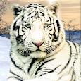 Wild White Tiger: Jungle Hunt