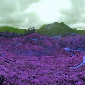Munnar by Valliappan Chellappan - Landscapes Prairies, Meadows & Fields ( plantations, handphone, kerala, india, travel, munnar )