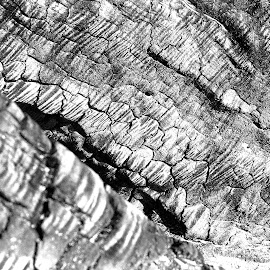 by Rachel Rachel - Abstract Patterns ( driftwood, wood, black and white, burnt )