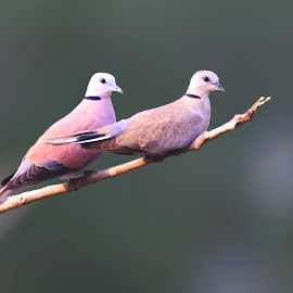 Birds by Subhendu Mahata - Uncategorized All Uncategorized