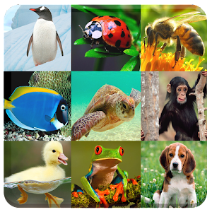 Zoo animals for kids: sounds, names, puzzle, memory... APK Icon