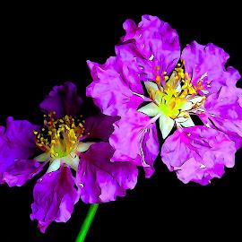 Purple delight by Asif Bora - Digital Art Things (  )