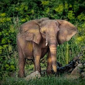 by William Underwood  - Animals Other Mammals