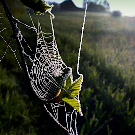 frozen by Marta Kolczyńska - Nature Up Close Webs