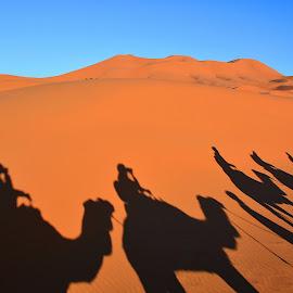 Sahara by Eugenija Seinauskiene - Landscapes Deserts